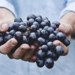I fattori che determinano il prezzo di un vino
