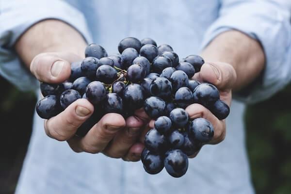 fattori-prezzo-vino